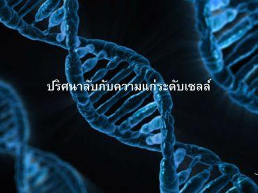 DNA, เซลล์, telomere