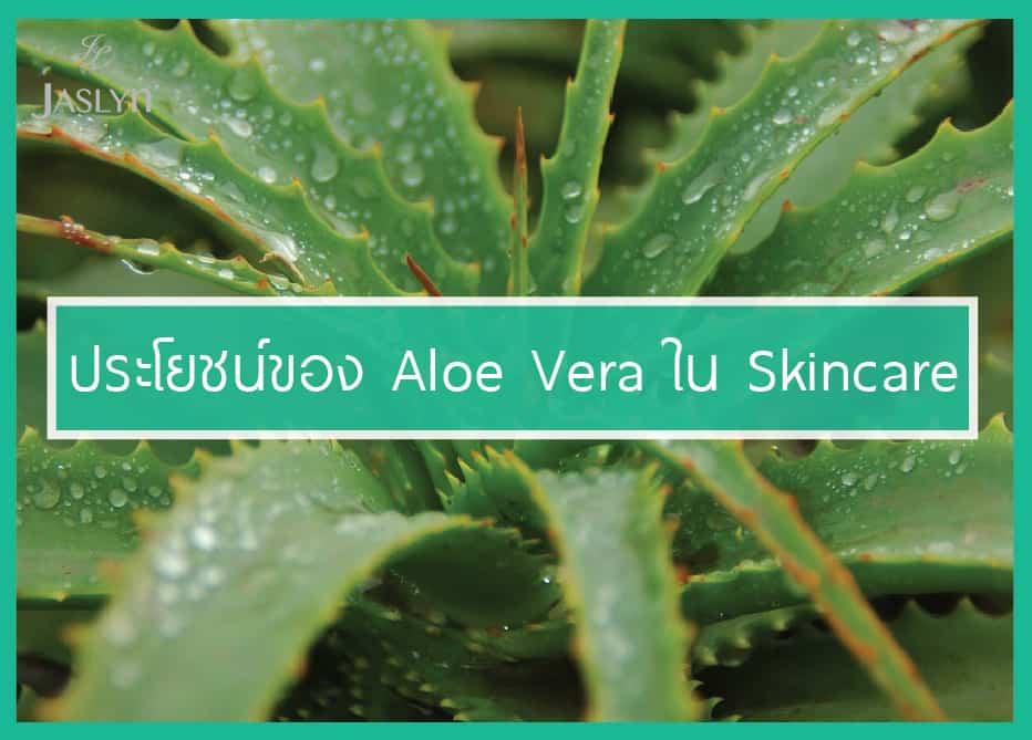 ว่านหางจระเข้ Aloe vera